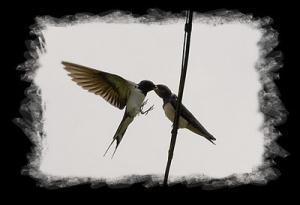 Quisiera Ser Golondrina Para Volar Frases Para Enamorar